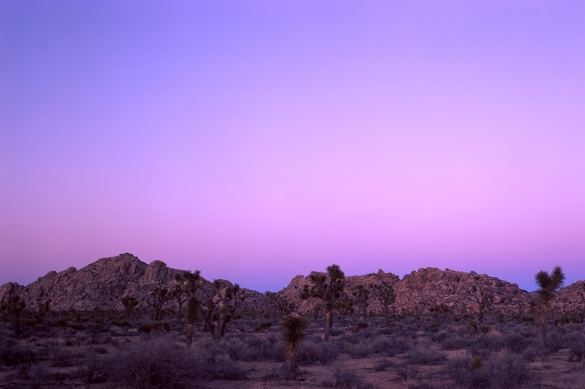 Skies rapidly turning pink in Joshua Tree National Park